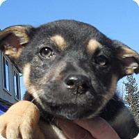 Adopt A Pet :: Baby Zia - Oakley, CA