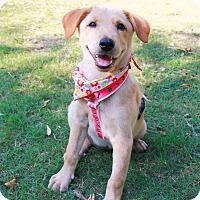 Adopt A Pet :: Kiko - Temple City, CA
