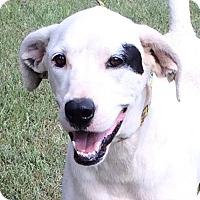 Adopt A Pet :: Dash - Slidell, LA