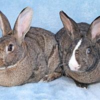 Adopt A Pet :: Peter & Leila (Bonded Pair) - Encinitas, CA