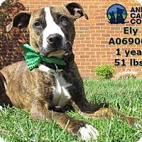 Adopt A Pet :: Ely - St. Louis, MO