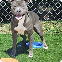 Adopt A Pet :: Hoss - Lake Panasoffkee, FL