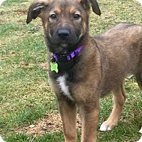 Adopt A Pet :: Lily - Sagaponack, NY