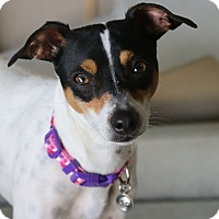 Adopt A Pet :: Charlie - Rockwall, TX