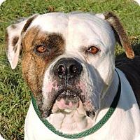 Adopt A Pet :: Tito - Nashville, IN