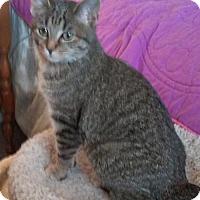 Adopt A Pet :: Bonita - Columbus, OH