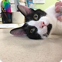 Adopt A Pet :: Buttons - Newburgh, IN