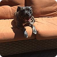 Adopt A Pet :: Tessa - Villa Park, IL