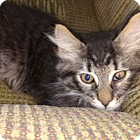 Adopt A Pet :: Vin - Used to Dogs! - Salamanca, NY