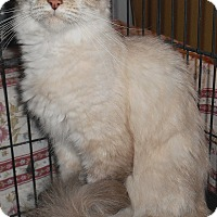 Adopt A Pet :: Minou - Chattanooga, TN