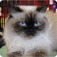 Adopt A Pet :: Mercedes - Beverly Hills, CA