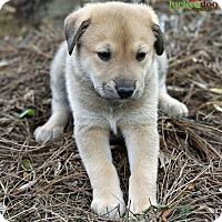 Adopt A Pet :: Jayden - Alpharetta, GA