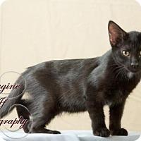 Adopt A Pet :: Inky - Crescent, OK