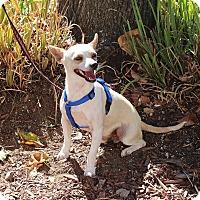 Adopt A Pet :: Otto - Yuba City, CA