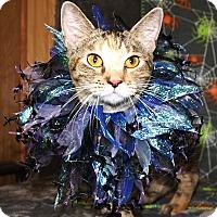 Adopt A Pet :: Tiny - Jackson, MS