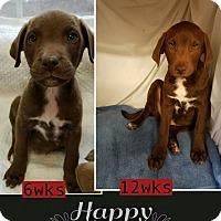 Adopt A Pet :: Patton-pending adoption - Manchester, CT