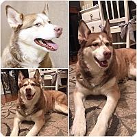 Adopt A Pet :: Tess - Boyertown, PA