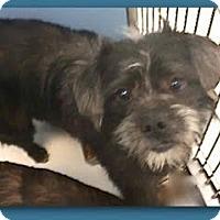 Adopt A Pet :: Nash-ADOPTION PENDING - Boulder, CO
