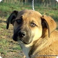 Adopt A Pet :: Duke - PRINCETON, KY