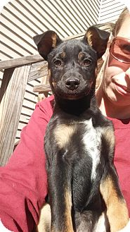 Australian Cattle Dog Mix Dog for adoption in Garden City, New York - Annabella