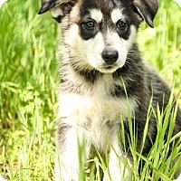 Adopt A Pet :: Smith - Auburn, CA