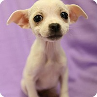 Adopt A Pet :: Minnie - Spring Valley, NY