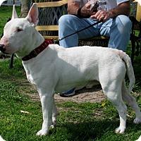 Adopt A Pet :: Echo - New Kensington, PA