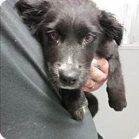 Adopt A Pet :: Cheeseball - Paducah, KY