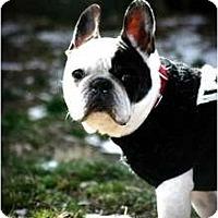 Adopt A Pet :: Dante - Milwuakee, WI