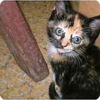 Adopt A Pet :: SNICKERS - Warren, OH