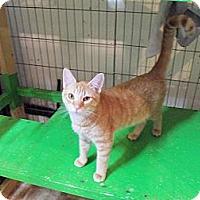 Adopt A Pet :: Huey - Catasauqua, PA