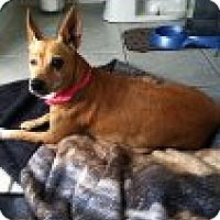 Adopt A Pet :: Mama Girl - Crowley, LA