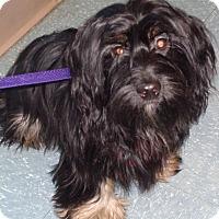 Adopt A Pet :: Meg - Orlando, FL