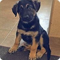 Adopt A Pet :: JESSE& JACE-ADOPTIONS PENDING - Nampa, ID