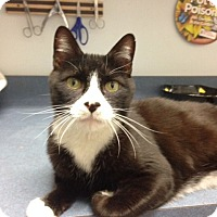 Adopt A Pet :: Andy - Oyster Bay, NY