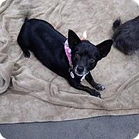 Adopt A Pet :: Blackie - Goodyear, AZ