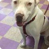 Adopt A Pet :: Spud - Irmo, SC