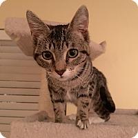 Adopt A Pet :: Bette Davis - Arlington/Ft Worth, TX