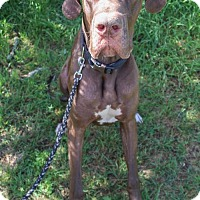 Adopt A Pet :: Maximus - Pipe Creed, TX