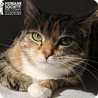 Adopt A Pet :: TIA - Sandusky, OH