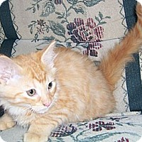 Adopt A Pet :: Damian - Gray, TN