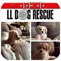 Adopt A Pet :: Wokling - Shawnee Mission, KS