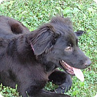 Adopt A Pet :: Marley-Pending - Glastonbury, CT