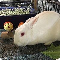 Adopt A Pet :: Mama Girl - Williston, FL