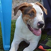 Adopt A Pet :: Chip - Arcadia, FL