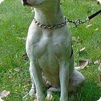 Adopt A Pet :: Missy - Gary, IN