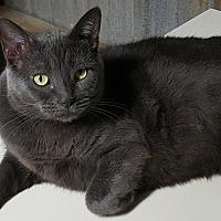 Adopt A Pet :: Bleu - Pasadena, CA