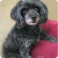 Adopt A Pet :: Maggie - Pascagoula, MS