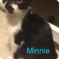 Adopt A Pet :: Minnie - Satellite Beach, FL