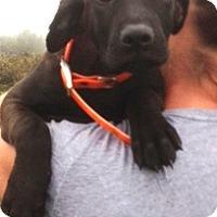 Adopt A Pet :: Bonnie - Medora, IN